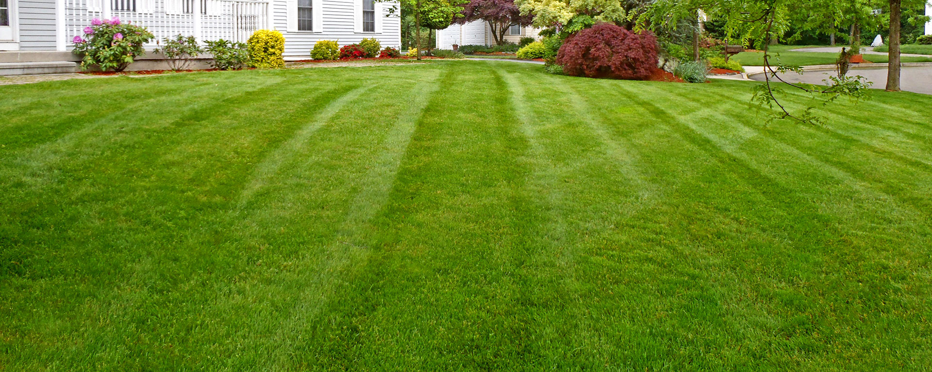 lawn-tip-top-shape-featured