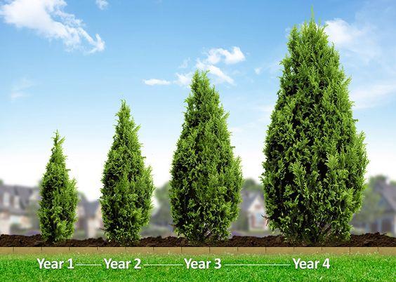 Evergreen-Growth-Chart