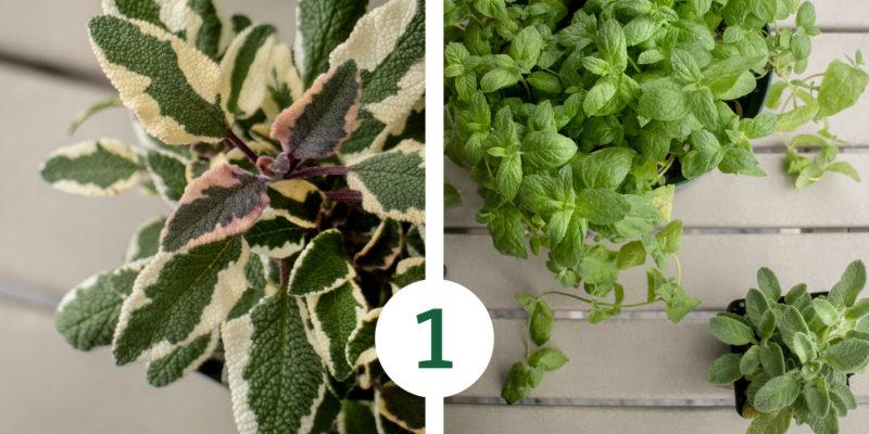 HerbGarden Process 1 e1527618201385