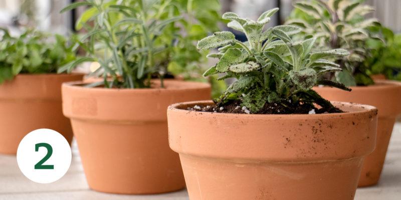 HerbGarden Process 2 e1527618222127
