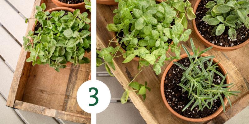 HerbGarden Process 3 e1527618237422