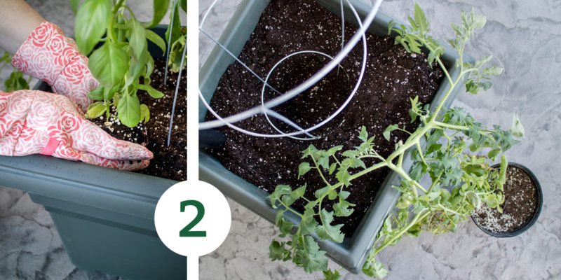 VeggieGarden Process 2 e1527620425381