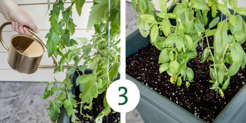 VeggieGarden Process 3 e1527620440723